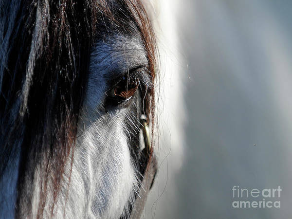 Gypsy Gold Art Print featuring the photograph Gypsy Eye by Carien Schippers