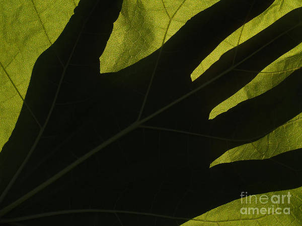Hand Art Print featuring the photograph Hand And Catalpa Veins Backlit by Anna Lisa Yoder