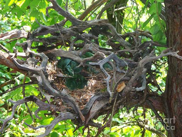 Nest Art Print featuring the photograph Heart-shaped Nest by Emily Kelley