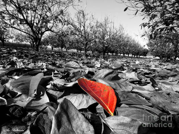 Autumn Art Print featuring the photograph Here Comes Autumn by Arik Baltinester