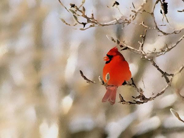 Cardinal Art Print featuring the photograph In Red by Gaby Swanson