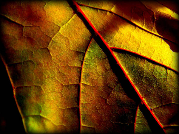 Yellow Art Print featuring the photograph In The Shadows by Lisa Jayne Konopka