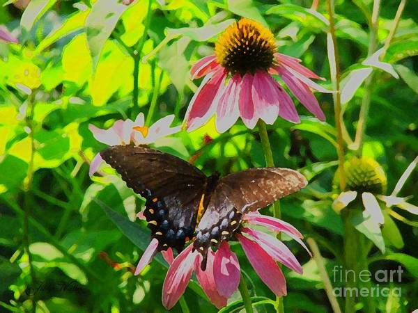 Butterfly Art Print featuring the photograph In The Upper Garden - One by Judy Waller