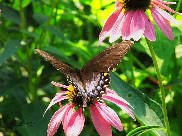 Butterfly Art Print featuring the photograph In The Upper Garden - Two by Judy Waller