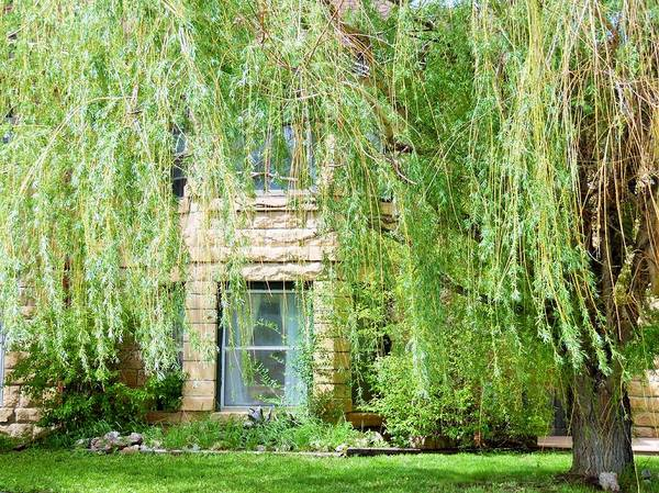 House Art Print featuring the photograph In The Weeping Willows by Pamela Pursel