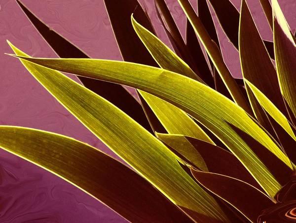 Leaves Art Print featuring the photograph Iris Art by Jim Darnall