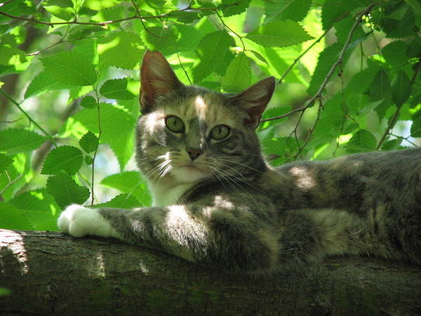 Art Print featuring the photograph Ivy In The Tree by Kathy Roncarati