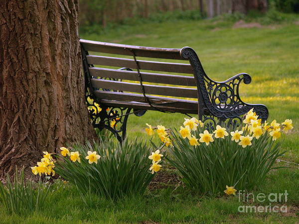 Bench Art Print featuring the photograph Just Talk by Michael Canning