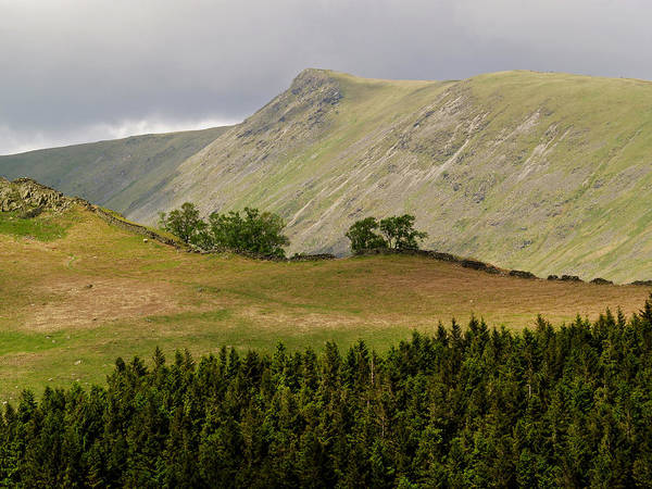 Trees Art Print featuring the photograph Kidsty Pike by Steve Watson