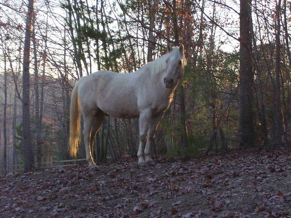 Horse Art Print featuring the photograph King Of The Hill by Kristen Hurley