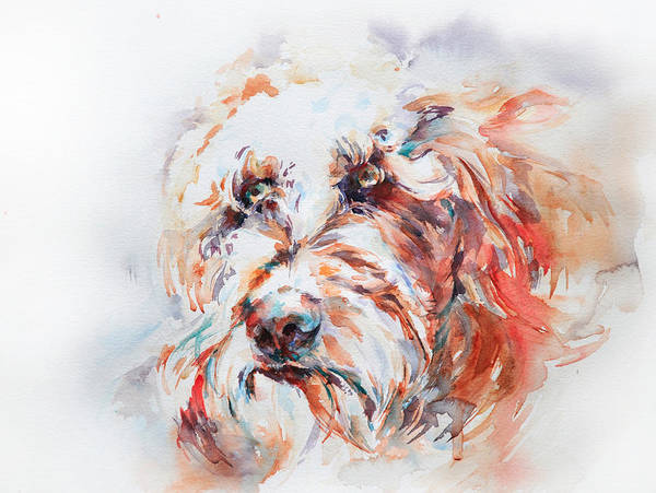 Stephie Butler Art Print featuring the painting Labradoodle by Stephie Butler
