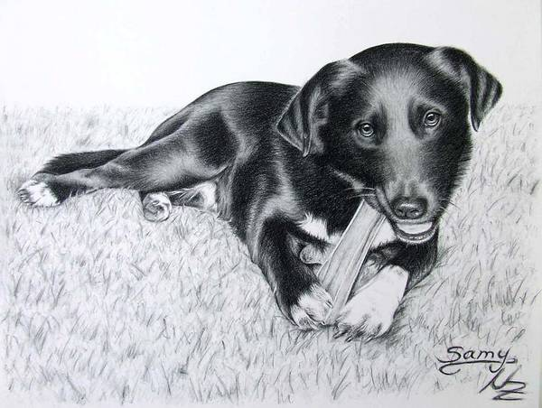 Dog Art Print featuring the drawing Labrador Samy by Nicole Zeug