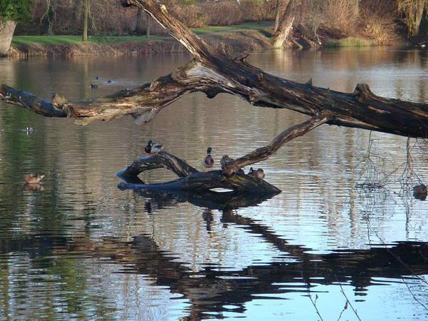 Nature Photos Art Print featuring the photograph Lake by Omar De La Garza Viera