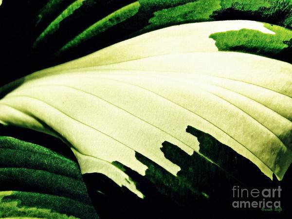 Leaf Art Print featuring the photograph Leaf Abstract 7 by Sarah Loft