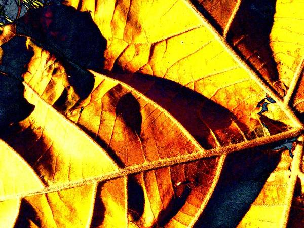 Sycamore Art Print featuring the photograph Leaf Veins Abstract by Beth Akerman