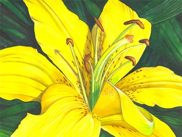 Lily Art Print featuring the painting Lemon Lily by Catherine G McElroy