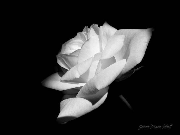 Rose Art Print featuring the photograph Light On Rose Black And White by Jennie Marie Schell