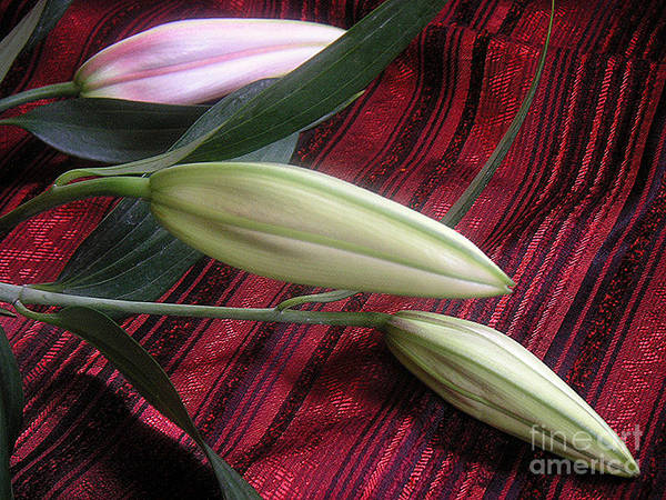 Nature Art Print featuring the photograph Lily Stem On Red Brocade by Lucyna A M Green