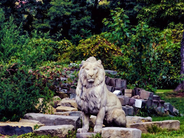 68steelphotos Art Print featuring the photograph Lion In A Concrete Jungle by Scott Bryan