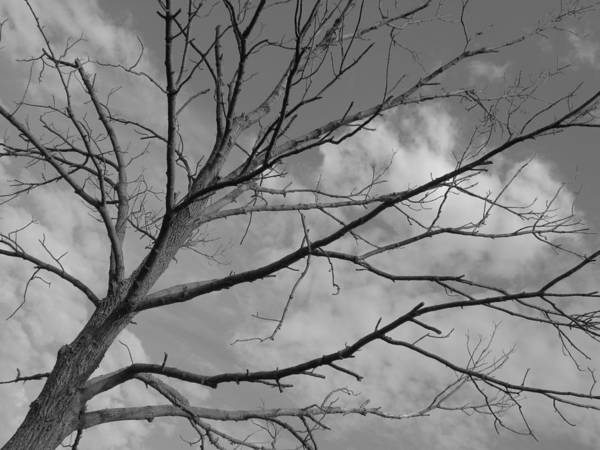 Black And White Art Print featuring the photograph Lonely Tree by Doug Hansen