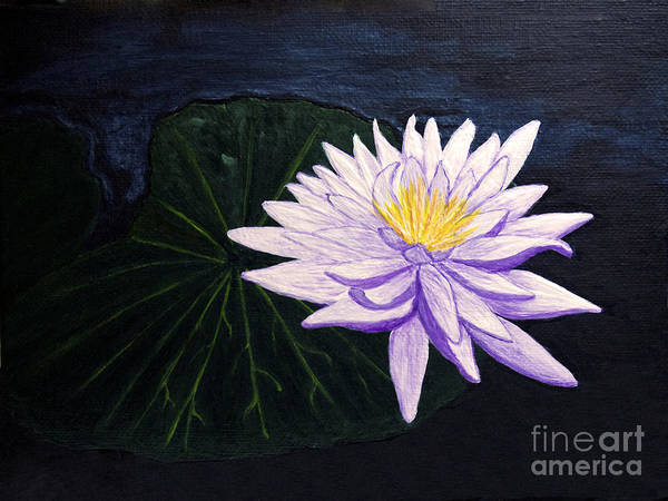 Original Painting Art Print featuring the painting Lotus Blossom At Night by Patricia Griffin Brett