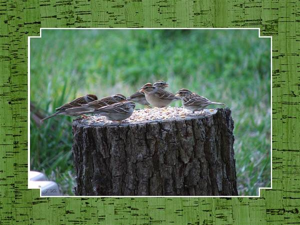 Wren's Art Print featuring the photograph Lunch Time At The Tree Log Diner by Judy Waller