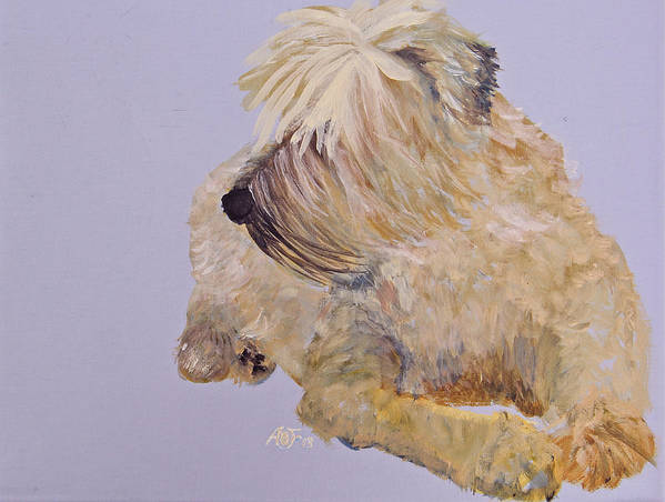 Wheaten Terrier Art Print featuring the painting Madigan Wheaten Terrier by Amy Fissell