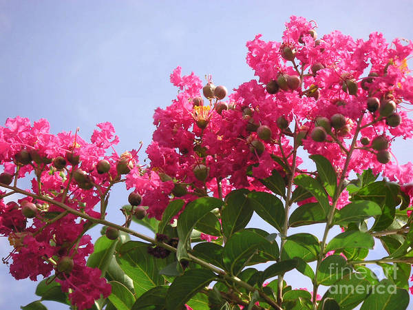 Nature Art Print featuring the photograph Magenta Flames by Lucyna A M Green