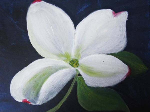 Apple Blossom Art Print featuring the painting Midnight Blossom by Trilby Cole