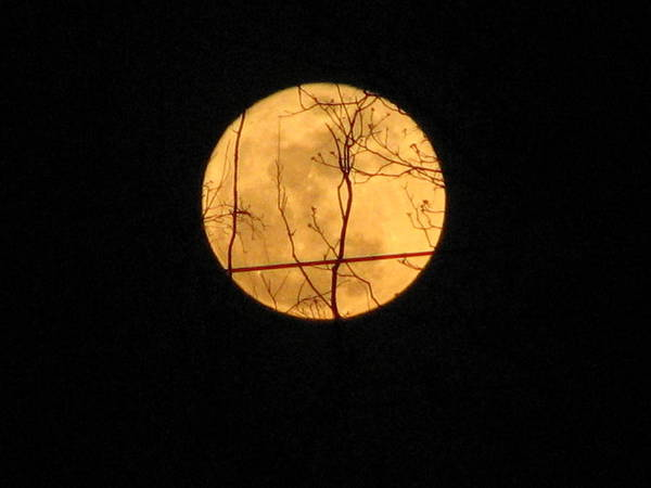 Moon Art Print featuring the photograph Moon by Stacey May