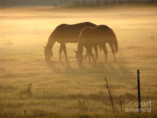 Horse Art Print featuring the photograph Morning Grazing by Jack Norton