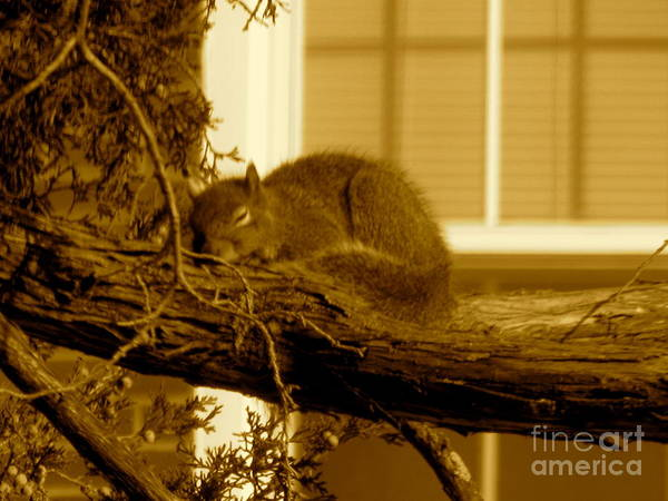 Squirrel Art Print featuring the photograph Naptime In The Sun by Sherri Williams