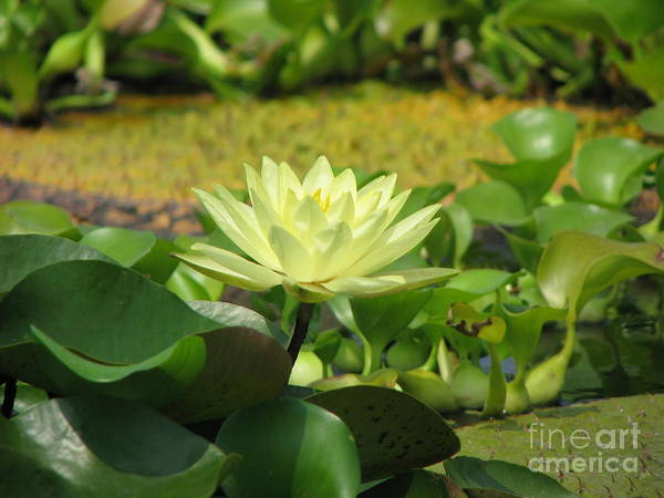 Nature Art Print featuring the photograph Nature by Amanda Barcon