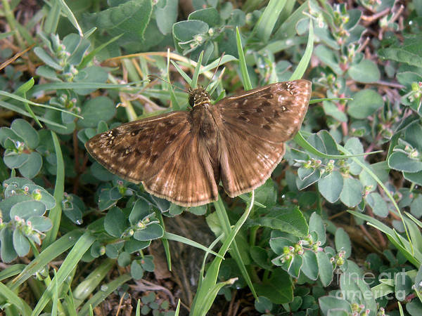 Nature Art Print featuring the photograph Nature In The Wild - Subtle Beauty by Lucyna A M Green