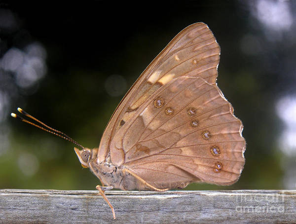 Nature Art Print featuring the photograph Nature In The Wild - The Autumn Migrant by Lucyna A M Green