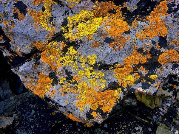 Rocks Art Print featuring the photograph Nature's Artwork by Roberto Alamino