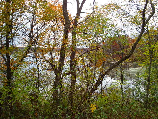 Autumn Landscape Art Print featuring the photograph Nature's Expression-11 by Leonard Holland