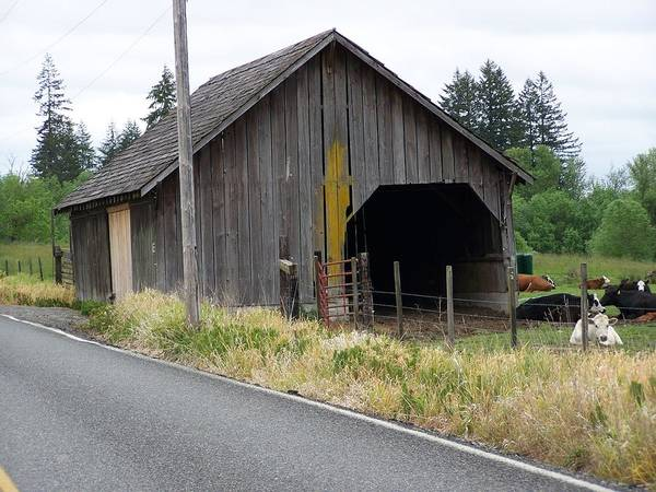 Barn Art Print featuring the photograph Old Cow Barn Washington State by Laurie Kidd