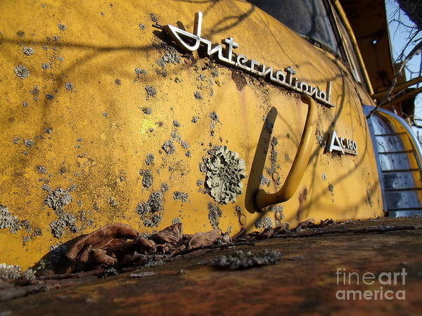 Yellow Art Print featuring the photograph Ol'yeller by The Stone Age
