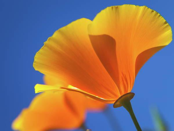 Orange Art Print featuring the photograph Orange by Lisa Lang