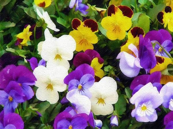 Pansies Art Print featuring the photograph Pansies by Sandy MacGowan