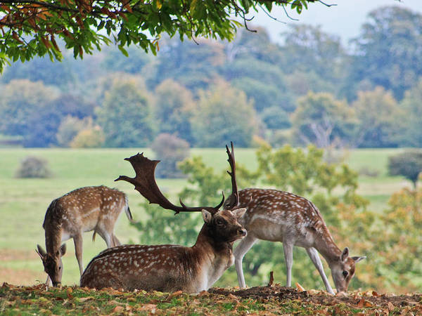 Deer Art Print featuring the photograph Peace And Quiet by Dawn OConnor