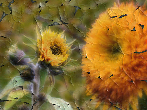Sunflowers Art Print featuring the photograph Peeling Away Summer by Tingy Wende