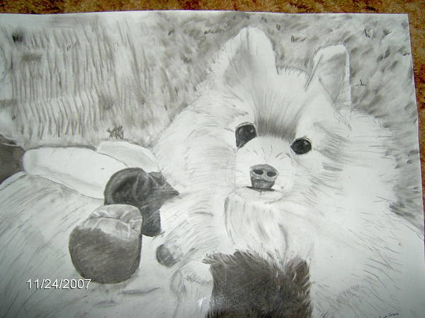 Dog Art Print featuring the drawing Pepe by Tina Brown