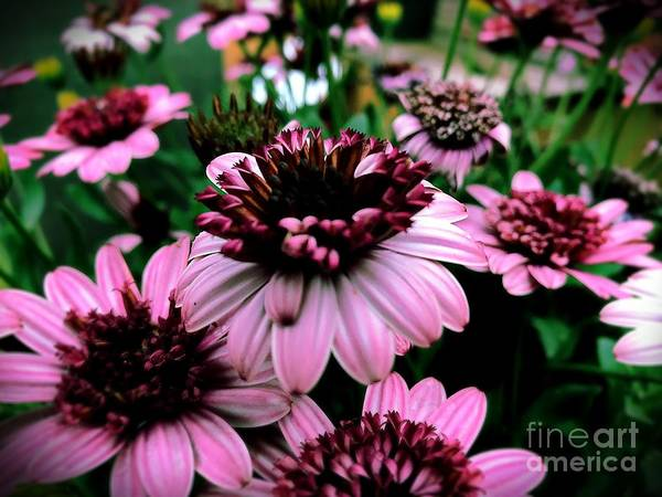 Flower Art Print featuring the photograph Perfect Pink by JB Thomas
