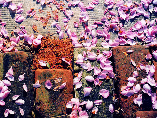 Spring Art Print featuring the photograph Petals On The Bricks 2 Ae by Lyle Crump