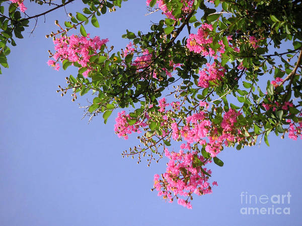 Nature Art Print featuring the photograph Pink And Blue Canopy by Lucyna A M Green