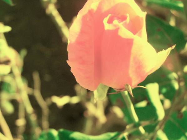 Flower Art Print featuring the photograph Pink Desolation by Filipa Mendes
