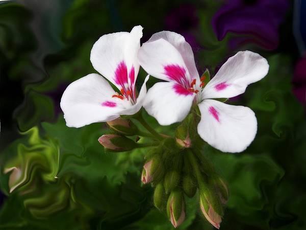 Flower Art Print featuring the photograph Pink Geranium Swirl by Jim Darnall