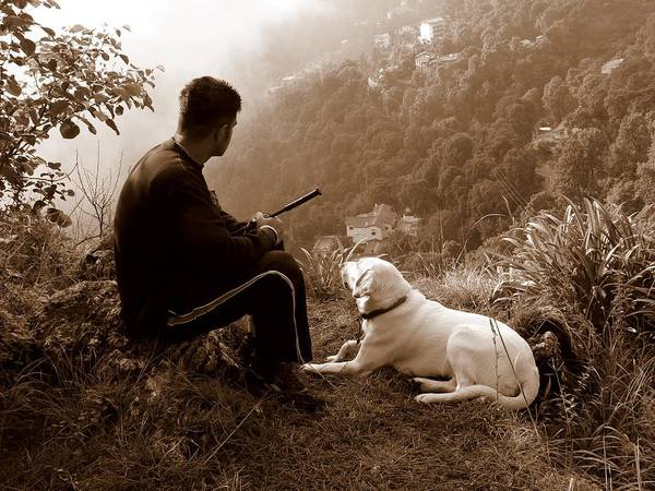 Dog Art Print featuring the photograph Piton And Bruno by Padamvir Singh
